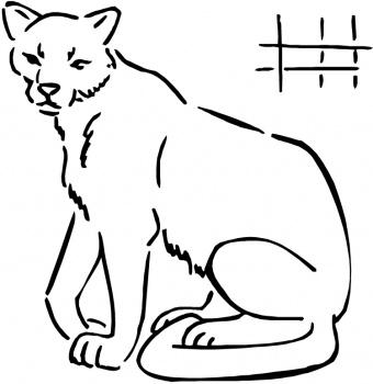 dibujo de puma