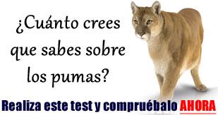 Alimentación del puma » PUMAPEDIA